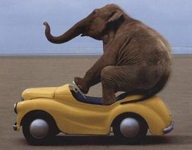 Động vật tiến hóa nhanh hơn do tác động của con người