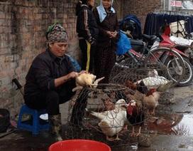 Sơn La: Phát hiện 3 ổ cúm trên gia cầm