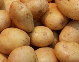 Phòng ung thư dạ dày bằng khoai tây