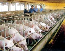TPP và chuyện một con lợn gánh 50 loại phí