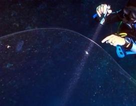 [Video] Phát hiện quả cầu trong suốt, khổng lồ dưới đáy biển