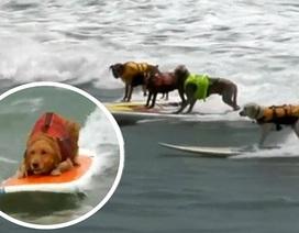 Cuộc thi chó lướt ván ở California