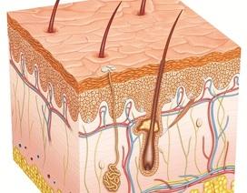 Thuốc triệt lông, có triệt lông vĩnh viễn?