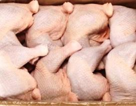Đấu lý với doanh nghiệp Mỹ vụ bán phá giá thịt gà: Khó thắng