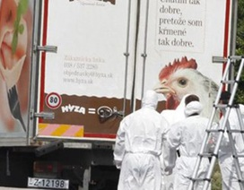 Phát hiện đường dây buôn người từ vụ xe tải nêm chật xác người tị nạn ở Áo
