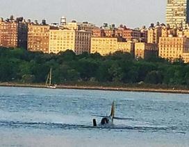 Mỹ: Máy bay chiến đấu cổ lao xuống sông Hudson, phi công thiệt mạng