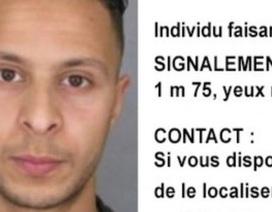 Bỉ bắt sống nghi phạm chính trong vụ khủng bố Paris