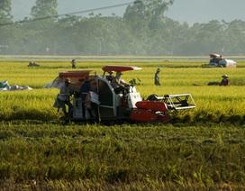 Xe gặt đập giúp nông dân thoát cảnh phơi mình dưới nắng