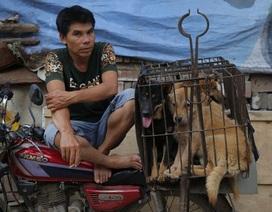 Trung Quốc tổ chức lễ hội thịt chó bất chấp biểu tình