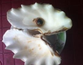 Ra biển mò ốc được viên ngọc quý 1 tỷ đồng