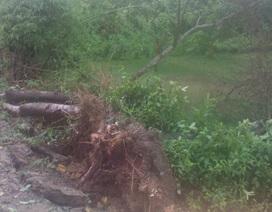 Lốc lớn thổi bay nhiều mái nhà, cây cối tại Hà Tĩnh