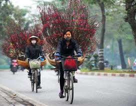 Thú chơi hoa đào rằm tháng Giêng độc đáo của người Hà Nội