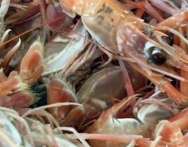 Đặc sản tôm càng biển: Tươi sống vẫn đỏ au như luộc