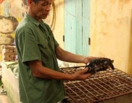 Đàn rùa bạc tỉ của lão nông tuổi thất thập