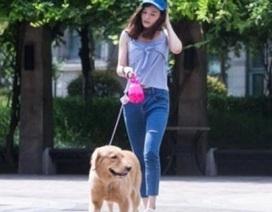 Nữ sinh kiếm bộn tiền nhờ nghề dắt chó thuê