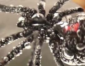 """Kinh hãi nhện """"góa phụ đen"""" bị dìm dưới nước 3 giờ vẫn sống"""