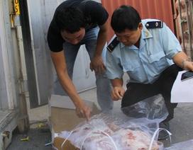 Hiểm nguy khó diễn tả từ 27 tấn thịt đông lạnh vô thừa nhận