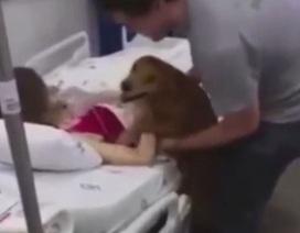 Cảm động chú chó đến viện thăm chủ để hoàn thành nguyện ước cuối