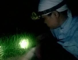 Nông dân Hà Nội nửa đêm rủ nhau xuống đồng nhổ mạ
