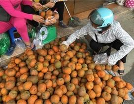 Sự thật cam Hà Giang quấn nilon ngập chợ Hà Nội