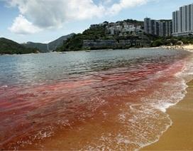 Những đợt thủy triều đỏ đáng sợ trong lịch sử thế giới
