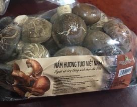 Sợ dính hàng bẩn, siêu thị đồng loạt cấm cửa nấm hương