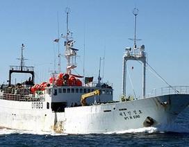 Hai thuyền viên Việt Nam bị tố sát hại thuyền trưởng Hàn Quốc