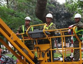 Hà Nội: Theo chân những người cắt tỉa cây xanh trên xe cẩu chuyên dụng