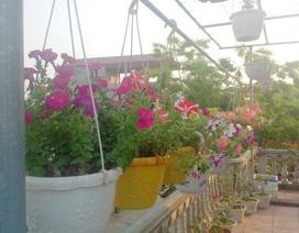 Ảnh dự thi số 5: Vườn treo rợp bóng mát, muôn sắc hoa
