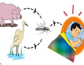 Ðã ghi nhận 2 ca bệnh nhi mắc viêm não Nhật Bản B