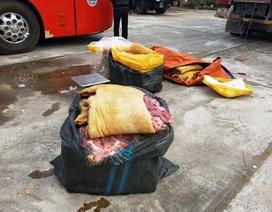 """Bắt hơn 250 kg thịt """"phù phép"""" thành thịt lợn rừng"""