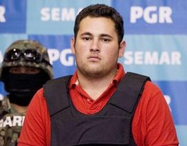 "Ai bắt cóc con trai trùm ma túy khét tiếng Joaquin ""El Chapo"" Guzman?"