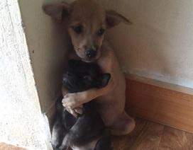 Hình ảnh hai chú chó ôm nhau khiến tim bạn tan chảy