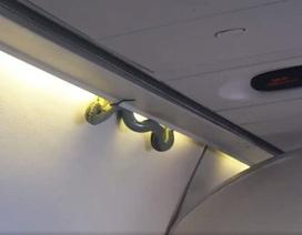 Hoảng hồn thấy rắn rơi trên máy bay