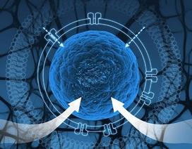 Tạo ra tế bào tổng hợp để cô lập mạch di truyền
