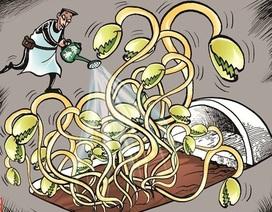 Sợ thực phẩm bẩn, người dùng lo tìm sản phẩm bổ gan