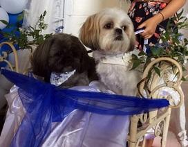 Bỏ ra hàng chục triệu đồng để tổ chức đám cưới cho chó