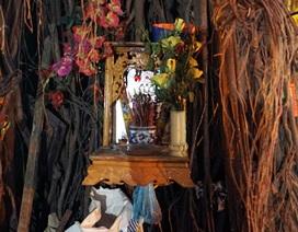 """""""Cúng thần"""" trên thân cây cổ thụ ở Hà Nội"""