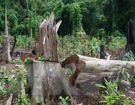 Vụ 3 nhân viên bảo vệ rừng bị bắn chết: Thêm 3 người nguy kịch