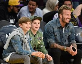 David Beckham nổi bật khi đi xem bóng rổ vì... quá đẹp trai