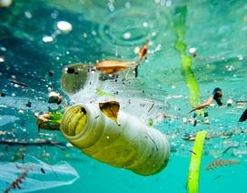 20 sự thật về ô nhiễm biển