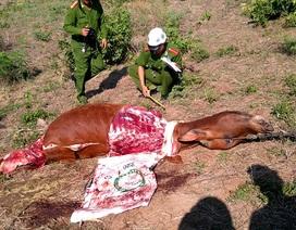 Kinh hãi nạn trộm bò, chặt đùi táo tợn