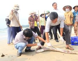 Sẽ sớm công bố nguyên nhân gây ra cá chết ở biển Miền Trung