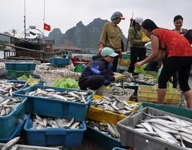 Ngư dân miền Trung được bồi thường ở mức cao nhất trên 50 triệu đồng
