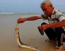 Sau cá chết, nhiều ngư dân miền Trung phải đi làm thuê kiếm sống