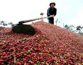 """Nông sản Việt xuất sang Trung Quốc: Mục tiêu """"phá ngưỡng"""" 5 tỷ USD"""