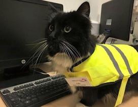 Cô mèo đáng yêu được ngành đường sắt trao quà tặng đặc biệt