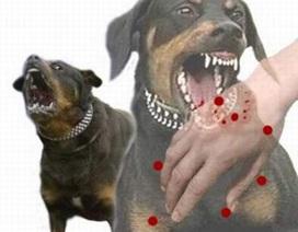 Chó dại cắn 7 người, 1 thai phụ tử vong
