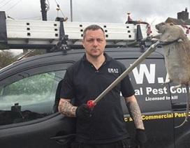 """""""Siêu chuột"""" khổng lồ đang khủng bố cộng đồng đô thị ở Anh"""