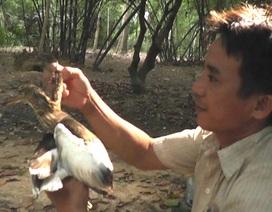 Lão nông hơn nửa thế kỷ canh giữ vườn cò xứ Nghệ